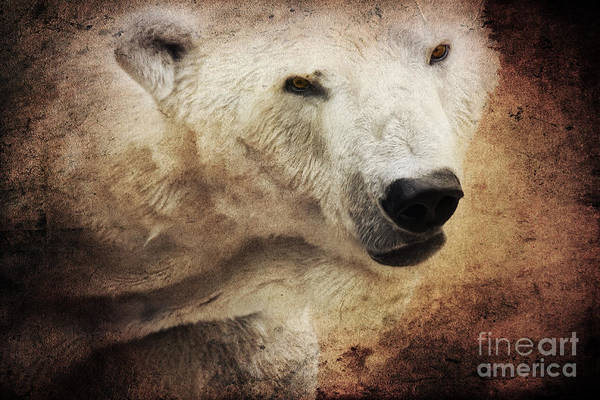 Mixed Media - The Polar Bear by Angela Doelling AD DESIGN Photo and PhotoArt