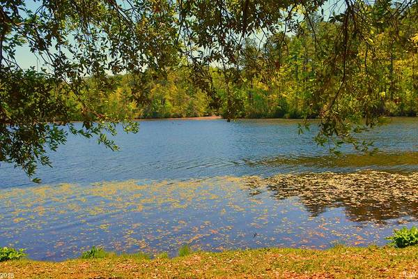 Photograph - The Pond At Sesquicentennial State Park by Lisa Wooten