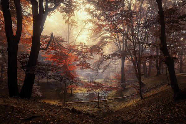 Wall Art - Photograph - The Pool by Martin Podt