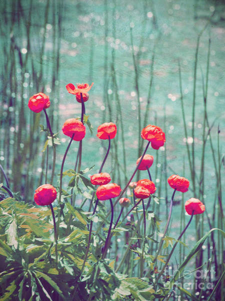 Photograph - The Poppies by Tara Turner