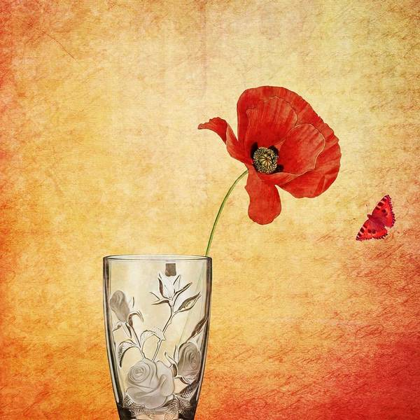 Painting - The Poppy And The Butterfly by Joy of Life Art Gallery