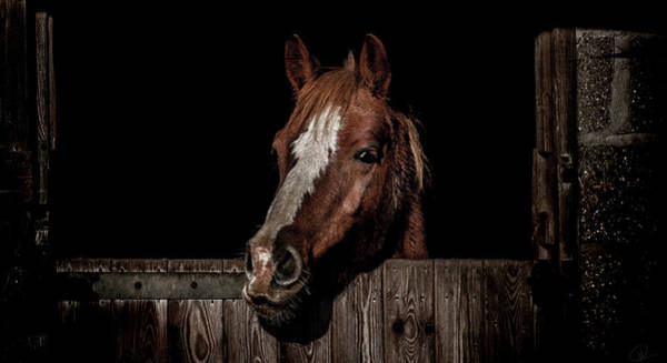 Ponies Photograph - The Poser by Paul Neville