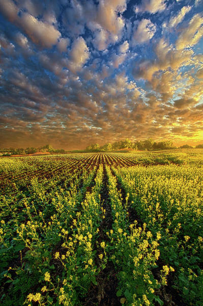 Wall Art - Photograph - The Possibilities Are Many by Phil Koch