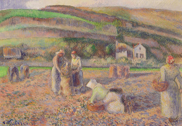 Wall Art - Painting - The Potato Harvest by Camille Pissarro