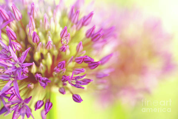 Manito Park Spokane Photograph - The Power Of Love by Beve Brown-Clark Photography