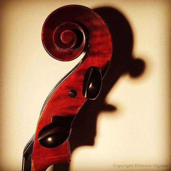 Music Wall Art - Photograph - The Profile  by Steven Digman