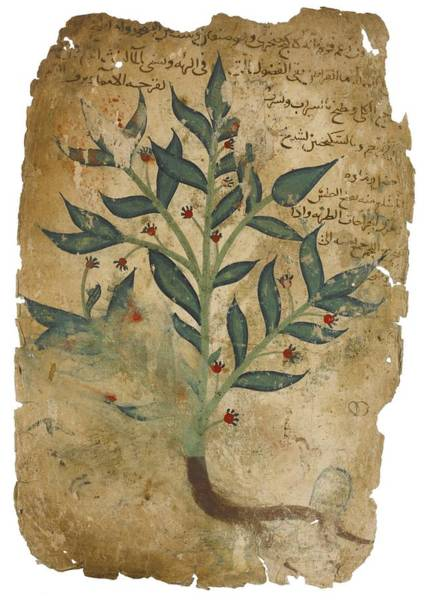 Baghdad Painting - The Properties Of Plants by Dioscorides