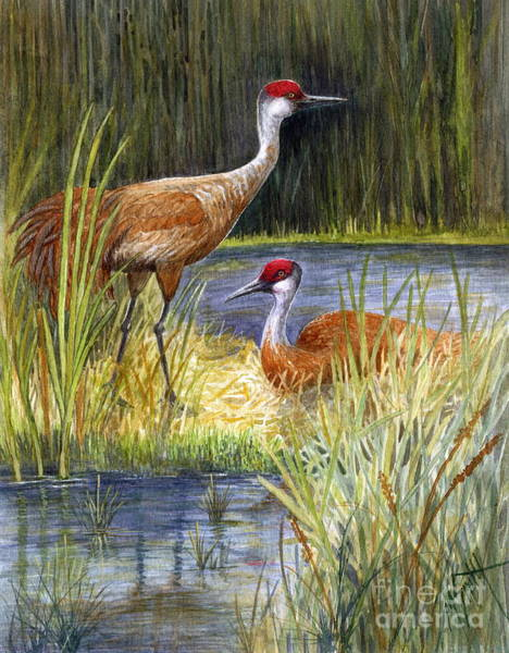 Painting - The Protector - Sandhill Cranes by Marilyn Smith