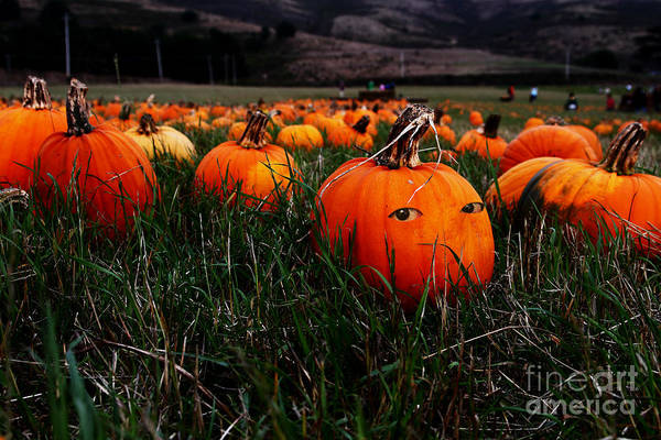 Photograph - The Pumpkin Patch . When Nobody Is Looking by Wingsdomain Art and Photography
