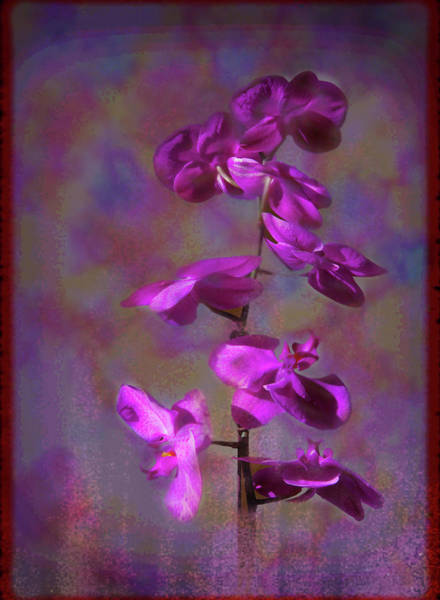 Photograph - The Purple Orchid by Rusty R Smith