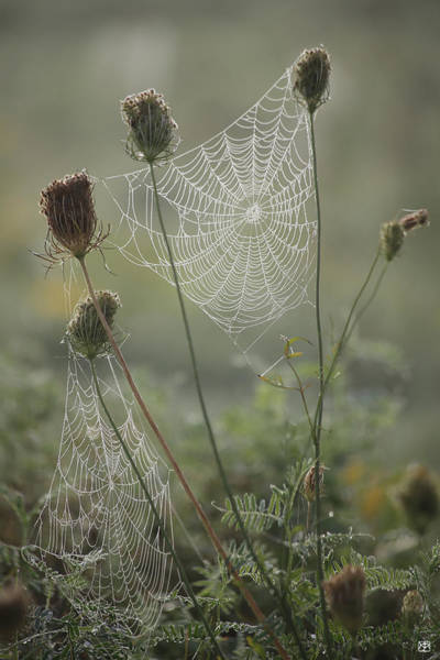 Photograph - The Queens Lace by John Meader