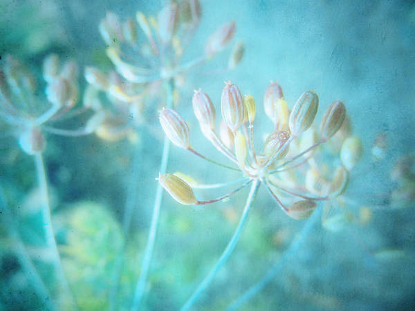 Photograph - The Quiet by Tara Turner