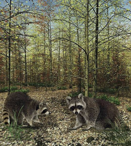 Raccoon Photograph - The Raccoons by G Berry