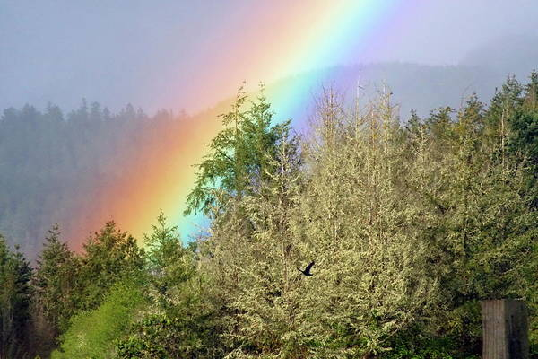 Photograph - The Raven And The Rainbow by Ben Upham III