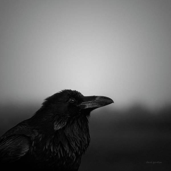Photograph - The Raven Bw by David Gordon