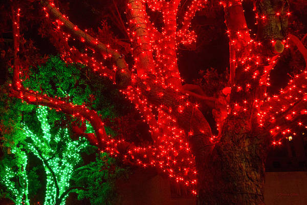 Photograph - The Red And Green 2 by Bonnie Follett