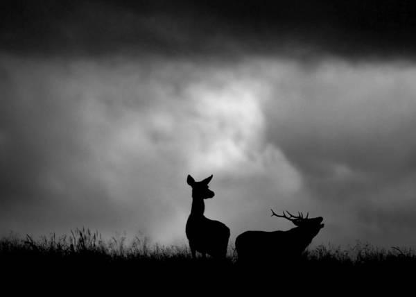 Photograph - The Red Deer Rut by Gavin MacRae