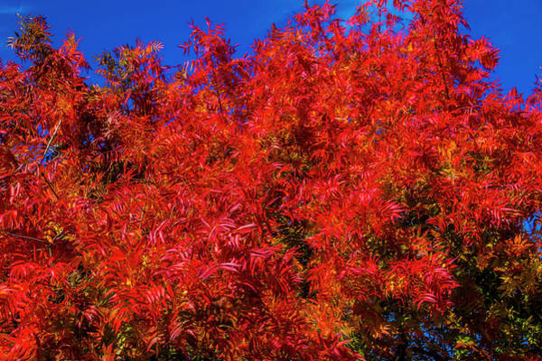 Wall Art - Photograph - The Red Flames Of Autumn by Garry Gay