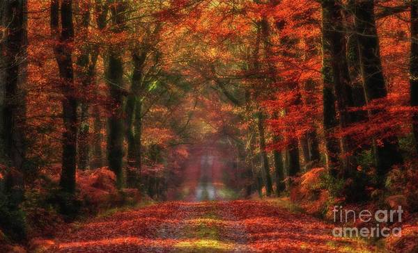 Photograph - The Red Path 2 by Dominique Guillaume