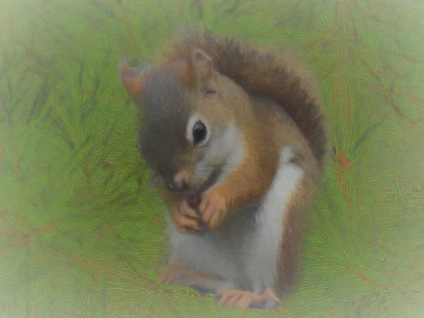Photograph - The Red Squirrel by Rusty R Smith