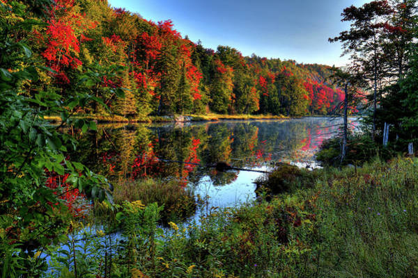 Photograph - The Reds Of Early Autumn by David Patterson
