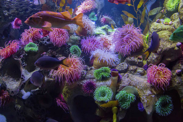 Salt Water Photograph - The Reef by Betsy Knapp