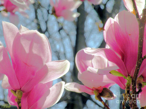 Wall Art - Photograph - The Return Of Spring by Christine Belt