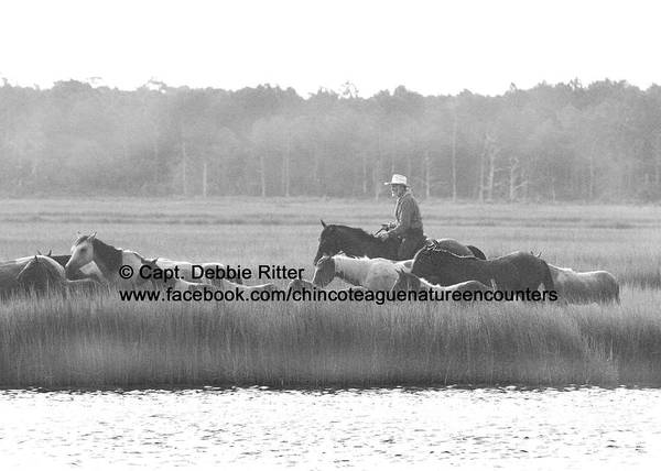 Photograph - The Rider by Captain Debbie Ritter