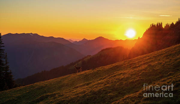 Alpine Meadows Photograph - The Ridge And The Deer by Mike Reid