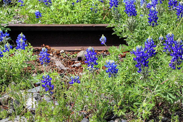 Photograph - The Right Side Of The Tracks by JC Findley