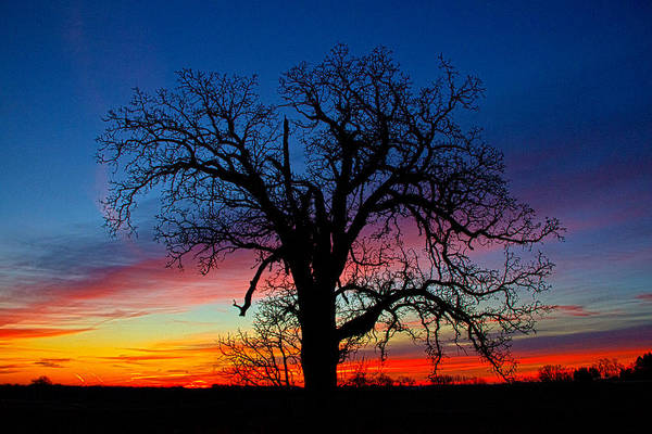 Photograph - The Risen Tree by Phil Koch