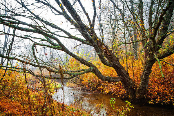 Franklin Park Photograph - The River Runs Through by Debra and Dave Vanderlaan