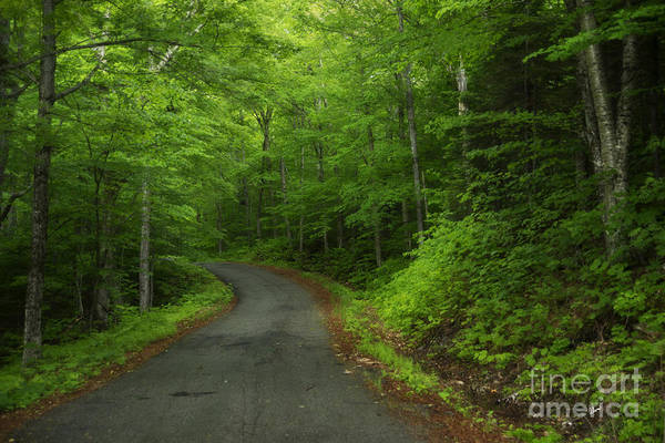 Photograph - The Road Less Traveled by Alana Ranney