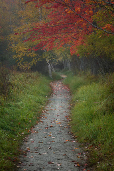 Photograph - The Road Less Traveled by Darylann Leonard Photography