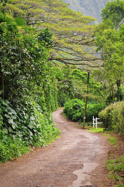 Photograph - The Road Less Traveled-waipio Valley Hawaii by Denise Bird