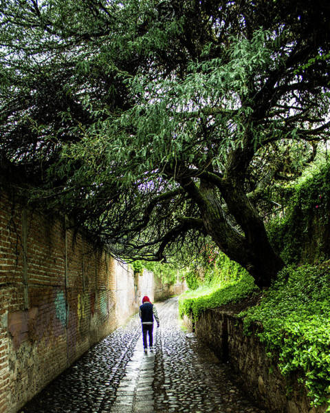 Photograph - The Road Less Travelled by Kevin Davis