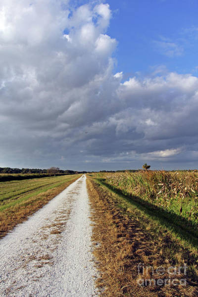 Photograph - The Road On Taylor Creek by Jennifer Robin