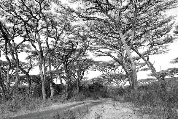 Photograph - The Road To Ngorongoro by Dawn J Benko