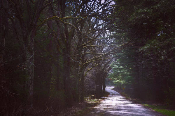 Canopy Photograph - The Road To Somewhere by Scott Norris