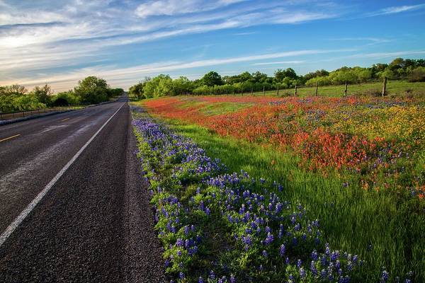 Photograph - The Road To Spring by Lynn Bauer