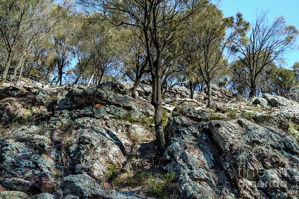 Photograph - The Rock Scenery 01 by Werner Padarin