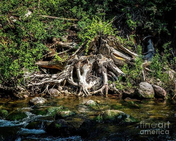 Photograph - The Root Of The Problem by Jon Burch Photography