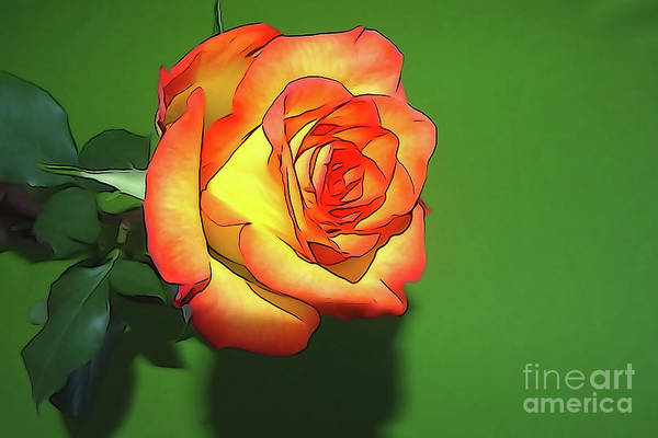 Photograph - The Rose 4 by Camille Pascoe