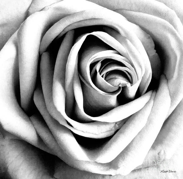 Photograph - The Rose by Michelle Constantine