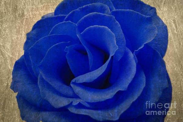 Wall Art - Photograph - The Rose Of Sadness by Jeffrey Kolker