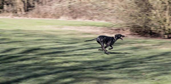 Wall Art - Photograph - The Run by Martin Newman