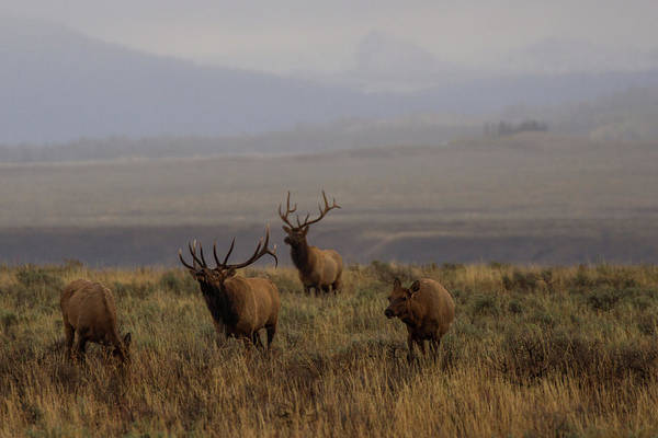 Teton National Park Digital Art - The Rut by Josh Metten