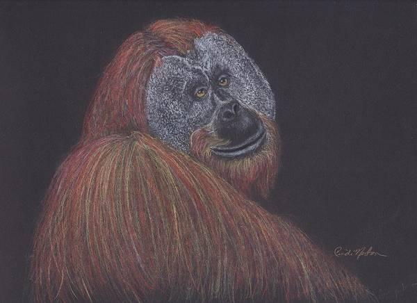 Sumatran Drawing - The Sadness In His Eyes by Cindi Norton