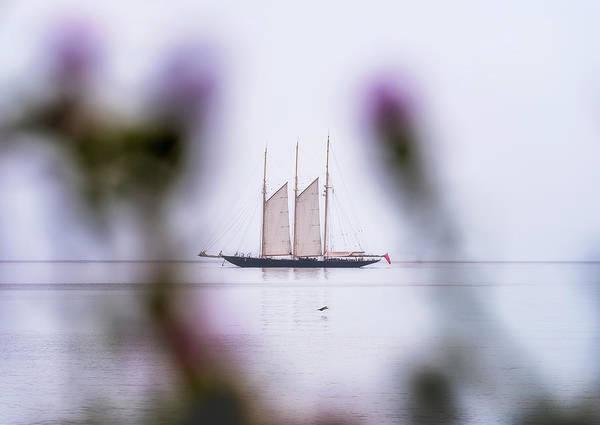 Wall Art - Photograph - The Sailing Boat by Adrian Malanca