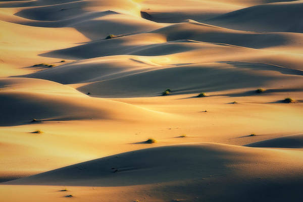 Photograph - The Sand And Light by Khaled Hmaad